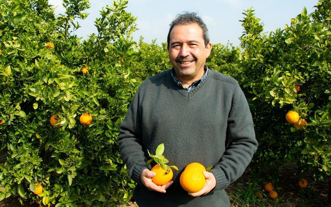 Vicent Alcayde. Naranjas de proximidad. Vicente Peris, producción integrada