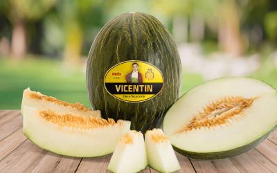 Vuelve Vicentín, el melón gourmet de Peris  que estabas esperando