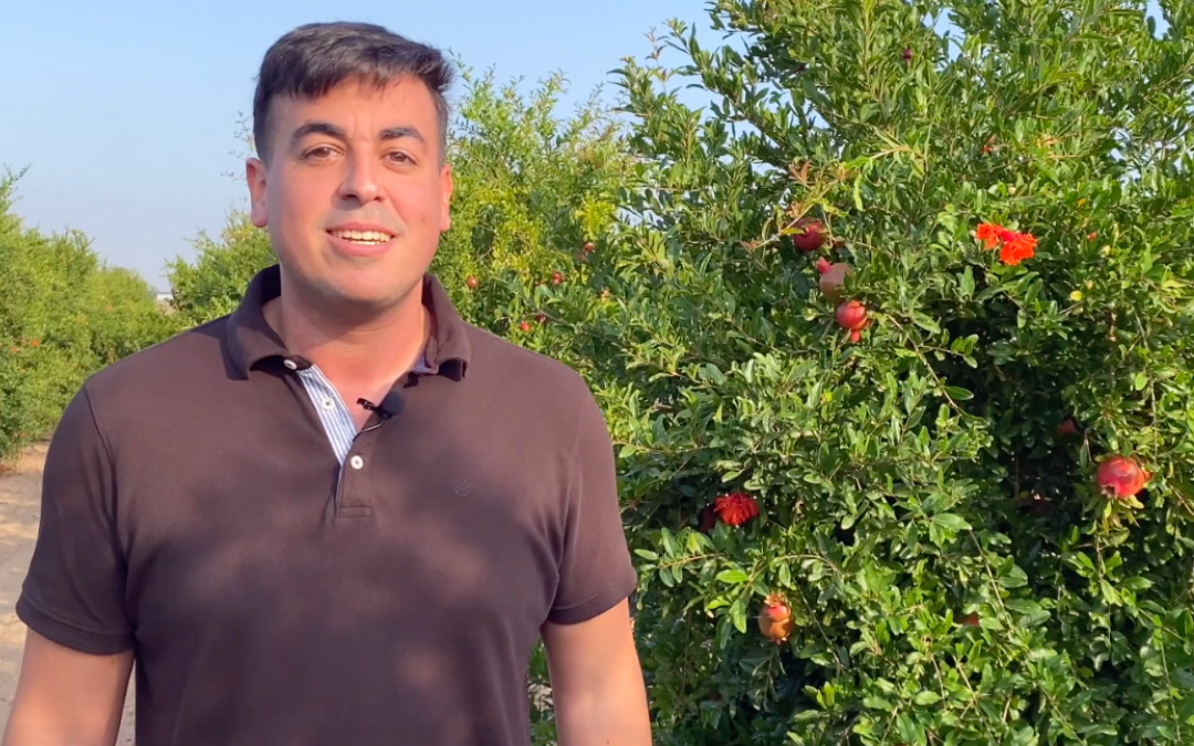 equipo-peris-aitor-diaz-contabilidad-administracion-empresa-frutas-verduras