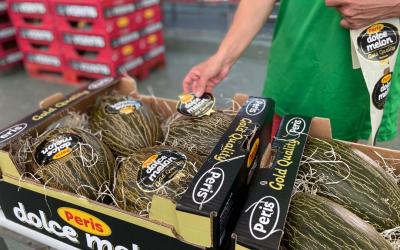 Un 10 para la campaña 2021 del mejor melón piel de sapo Peris de origen Murcia